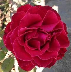 Cuadro con pétalos de rosas