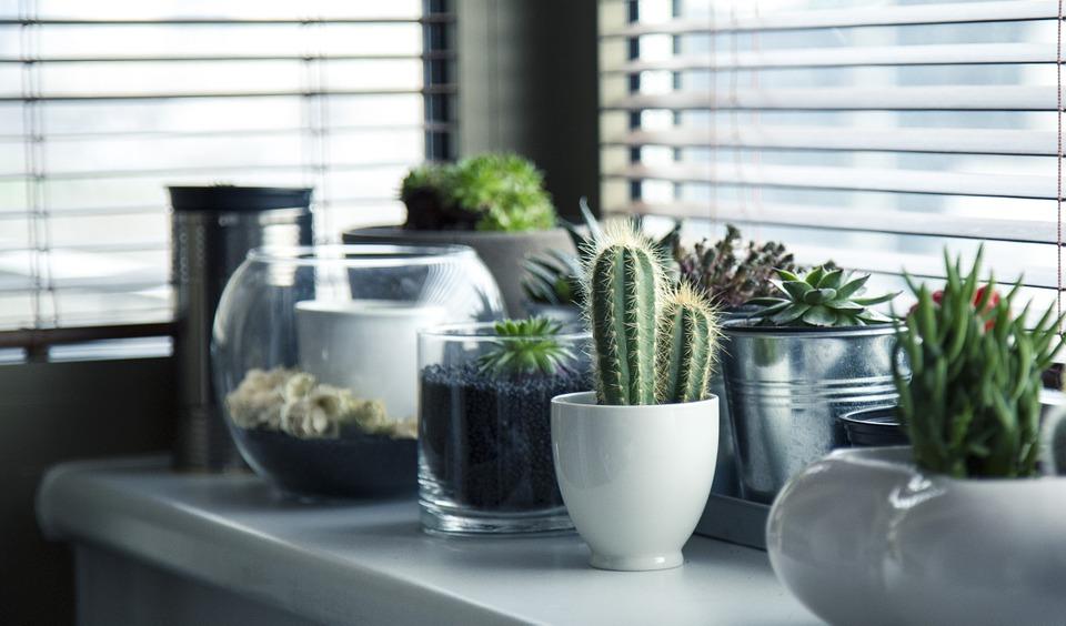 Como Hacer Macetas Para Cactus Recicladas Faciles Y Muy Lindas