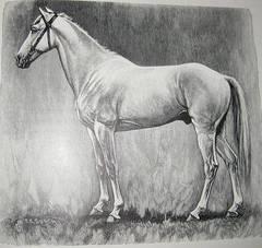 caballo zodiaco