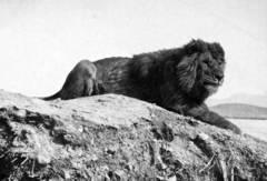 leon signo