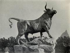 taurau