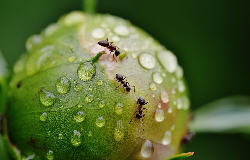 Qué significa soñar con hormigas negras o rojas en casa? - Innatia.com